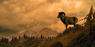 Pecore di Bighorn nelle montagne rocciose Immagini Stock Libere da Diritti