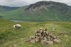 Pecore di montagna del distretto del lago Fotografia Stock Libera da Diritti