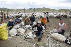 Pecore di Shephards Sheering del mongolian Immagini Stock Libere da Diritti
