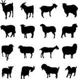 Pecore e capre fotografie stock