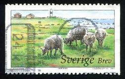 Pecore e faro in Oland Moorland immagine stock