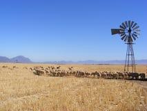 Pecore e mulino a vento fotografie stock