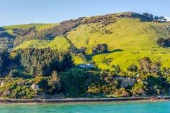 Pecore e pascoli in Nuova Zelanda Fotografie Stock Libere da Diritti