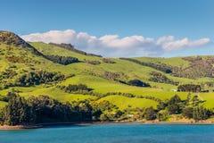 Pecore e pascoli in Nuova Zelanda Fotografia Stock Libera da Diritti