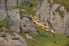Pecore e pastori sull'alta montagna Fotografie Stock
