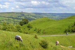 Pecore in Edale Derbyshire fotografia stock libera da diritti