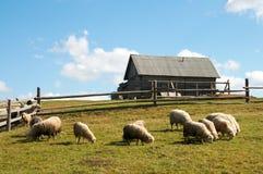 Pecore in montagna Fotografia Stock