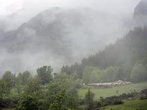 Pecore in montagne dei ecrins del DES del parco nazionale nelle alpi francesi di Alta Provenza Fotografie Stock Libere da Diritti