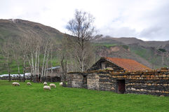 Pecore nel paesino di montagna georgiano Immagini Stock
