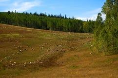 Pecore nel prato immagine stock libera da diritti