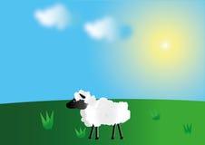 Pecore nel prato Fotografia Stock