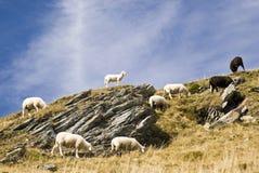 Pecore nella montagna fotografia stock