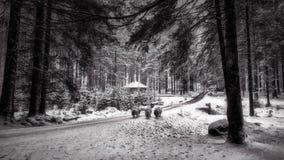 Pecore nella neve Dartmoor Forest Dartmoor National Park Devon Fotografia Stock