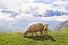 Pecore nelle montagne Immagine Stock Libera da Diritti