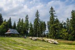 Pecore nelle montagne Fotografie Stock Libere da Diritti