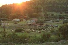 Pecore nelle montagne Immagini Stock