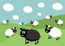 Pecore nere Immagini Stock