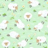 Pecore senza cuciture Fotografie Stock