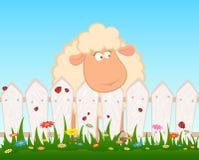 Pecore sorridenti dopo una rete fissa Immagine Stock Libera da Diritti