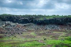 Pecore su un campo verde nel tempo di primavera Immagine Stock Libera da Diritti