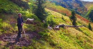 Pecore su un pascolo della montagna Fotografia Stock