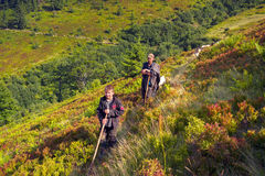 Pecore su un pascolo della montagna Immagini Stock Libere da Diritti