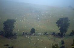 Pecore su un pendio di collina Fotografie Stock Libere da Diritti