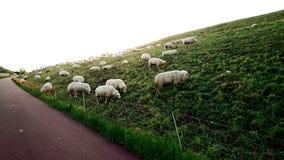 Pecore su una collina Fotografie Stock