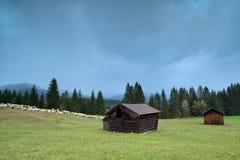 Pecore sul prato alpino Immagini Stock Libere da Diritti