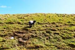 Pecore sulla collina verde Immagini Stock