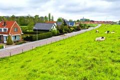 Pecore sulla diga protettiva in Olanda Immagine Stock