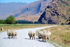 Pecore sulla strada non asfaltata Immagini Stock