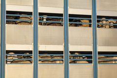 Pecore in un camion di trasporto, bestiame Fotografie Stock