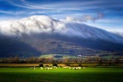 Pecore in valle di ayala fotografie stock