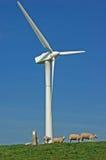 Pecore verdi del mulino a vento di energia Immagine Stock