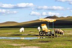 pecore in WulanBu tutto il campo di battaglia antico del pascolo Immagine Stock Libera da Diritti