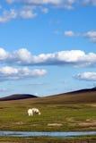 pecore in WulanBu tutto il campo di battaglia antico del pascolo Fotografia Stock