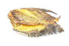 Pectoralis de Fried Trichogaster, alimento tailandês fritado dos peixes do salid Fotografia de Stock