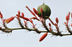 Peculiar Red Flowered Stem Royalty Free Stock Images