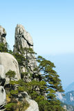 Peculiar rock and pine Royalty Free Stock Image