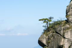 Peculiar rock and pine Stock Photography