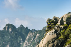 Peculiar rock and pine Royalty Free Stock Photography