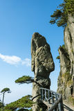 Peculiar rock and pine Royalty Free Stock Photo