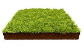 Pedaço de terra quadrado com grama verde