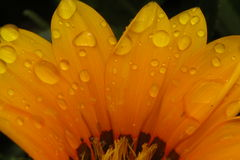 Pedais da flor Fotos de Stock