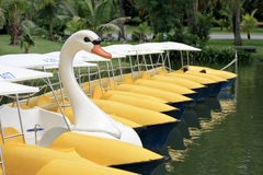 Pedal boat in form of a swan Stock Images