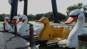 Pedal boat with the shaoe of ducks just existing. Relaxing video of five pedal boats with the shape of a swan and one duck stock video