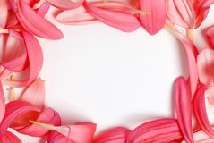 Pedal Border. Bright pink flower pedal create a beautiful border Royalty Free Stock Images