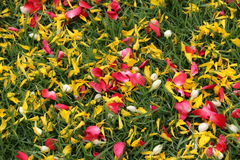 Pedal de flores sobre el campo de hierba verde Fotografía de archivo
