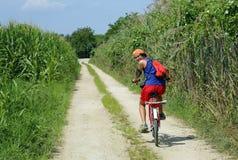 Pedal joven del ciclista en el camino con los campos de maíz laterales en verano Imágenes de archivo libres de regalías